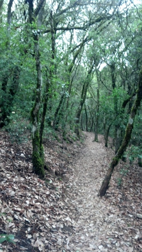 Love this mysterious eery tree pathway - Castle Rock Trail in Santa Cruz Mountains